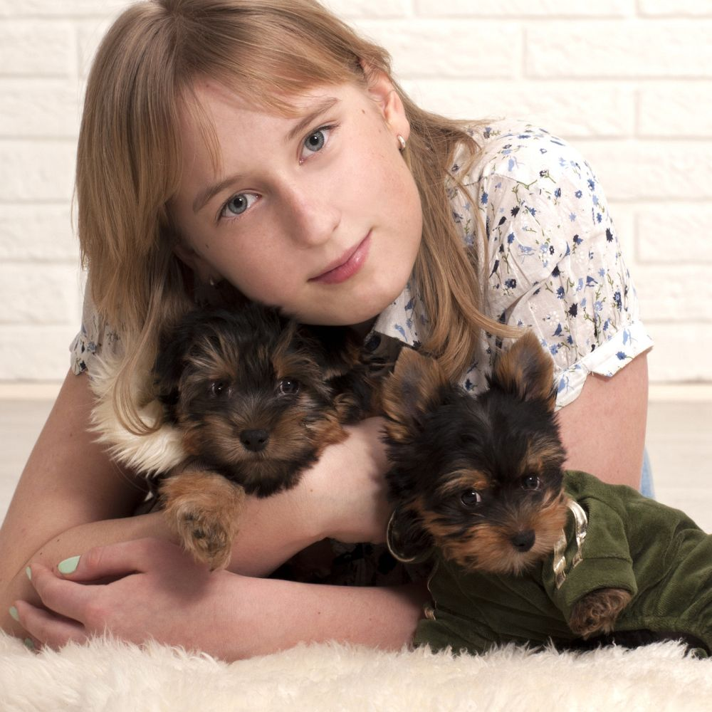 Familienhund Yorkshire Terrier