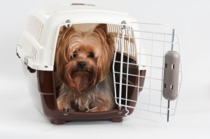 Transportbox Yorkshire Terrier