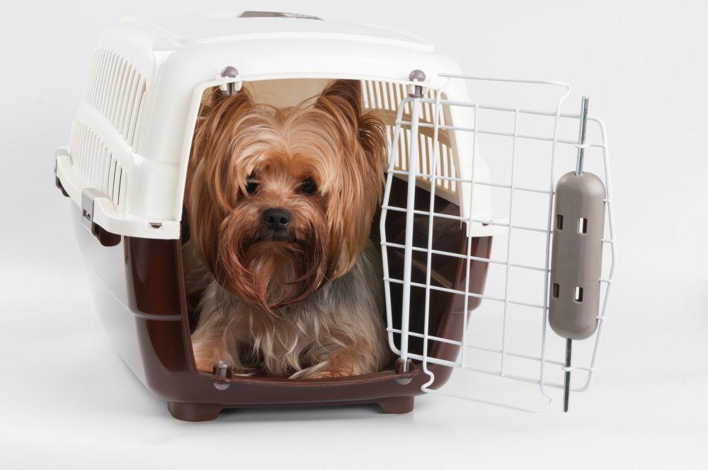 Transportbox Yorkshire Terrier