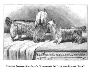 Yorkshire Terrier Huddersfield Ben