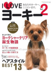 Yorkshire Terrier in Japan