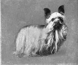 Yorkshire Terrier im Lexikon Britannica 1911