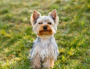 Yorkshire Urlaub Hundepension