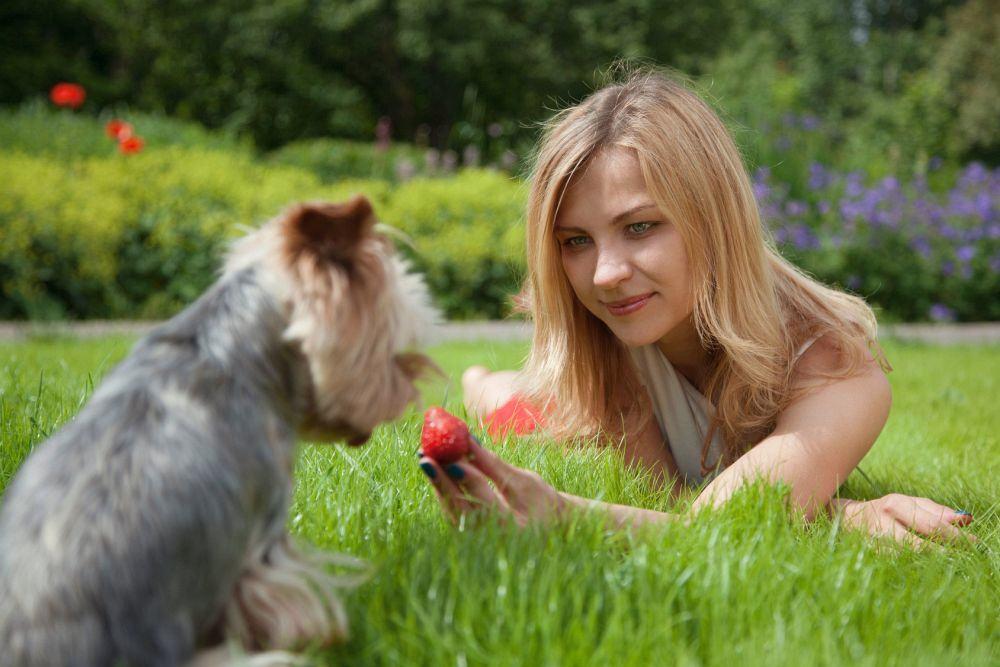 Leckerlie für den Yorkshire Terrier