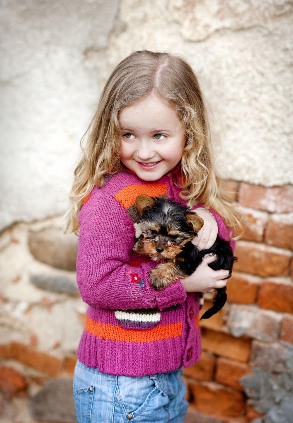 Süß ist sind die reinrassigen Yorkshire Terrier