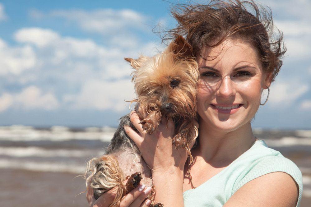 Urlaub mit Yorkshire Terrier