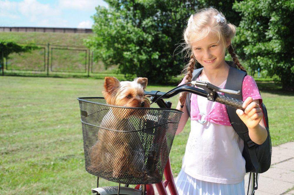 Yorkshire Terrier im Fahrradkorb