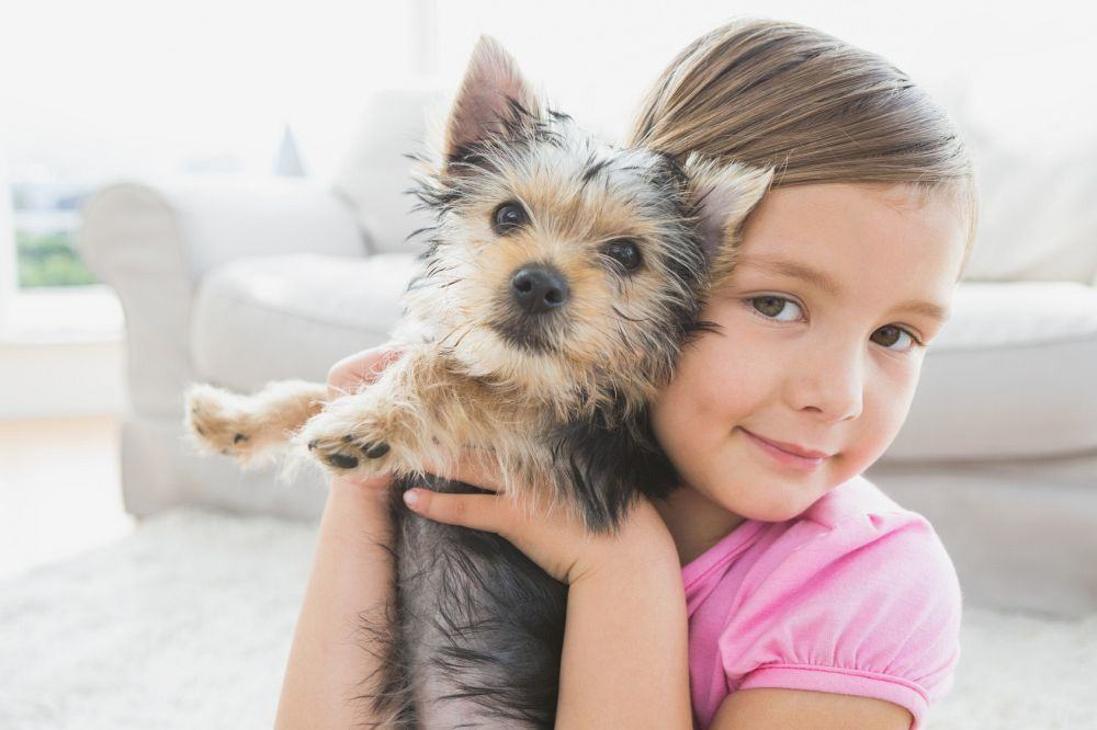 Yorkshire Terrier und Kinder