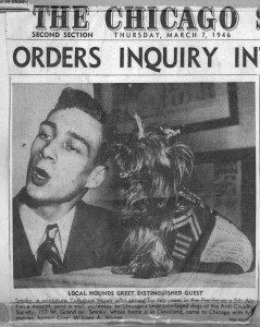 orkshire terrier smoky  bill-wynne-Chicago Sun March