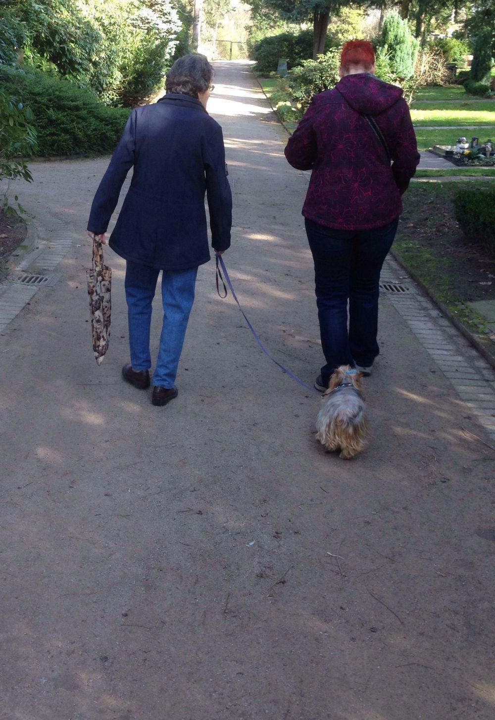 Spazieren gehen mit Yorkshire Terrier.