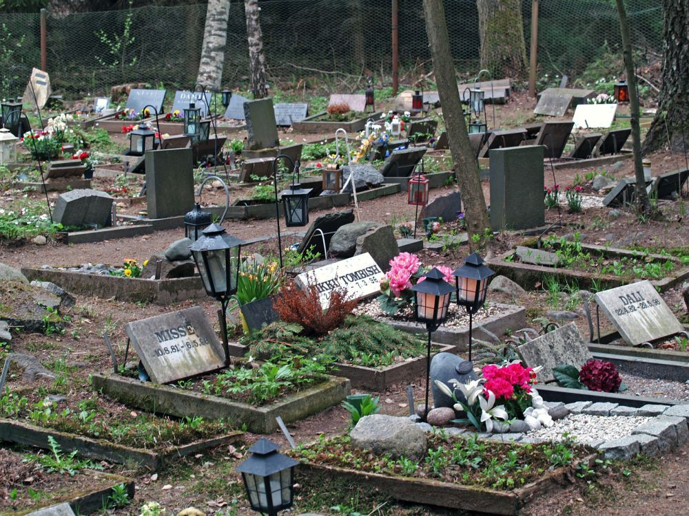 Yorkshire Terrier auf dem Tierfriedhof begraben.