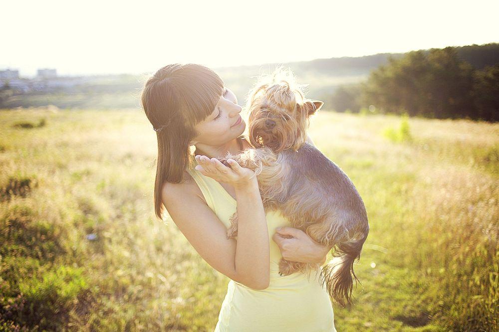 Yorkshire Terrier einschläfern lassen