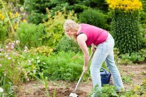 Meinen Yorkshire Terrier im eigenen Garten vergraben. Worauf muss ich achten?