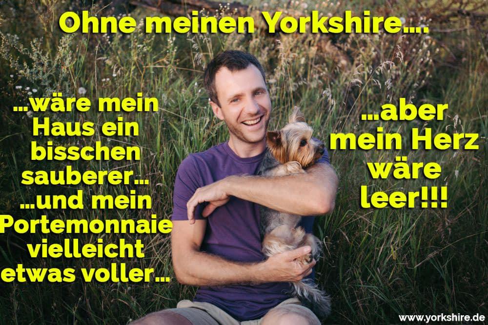 Der Mann hälte sein Yorkshire