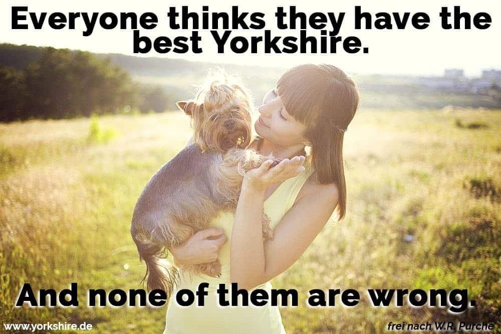 Die Frau hält ihr Yorkshire in der Sonne