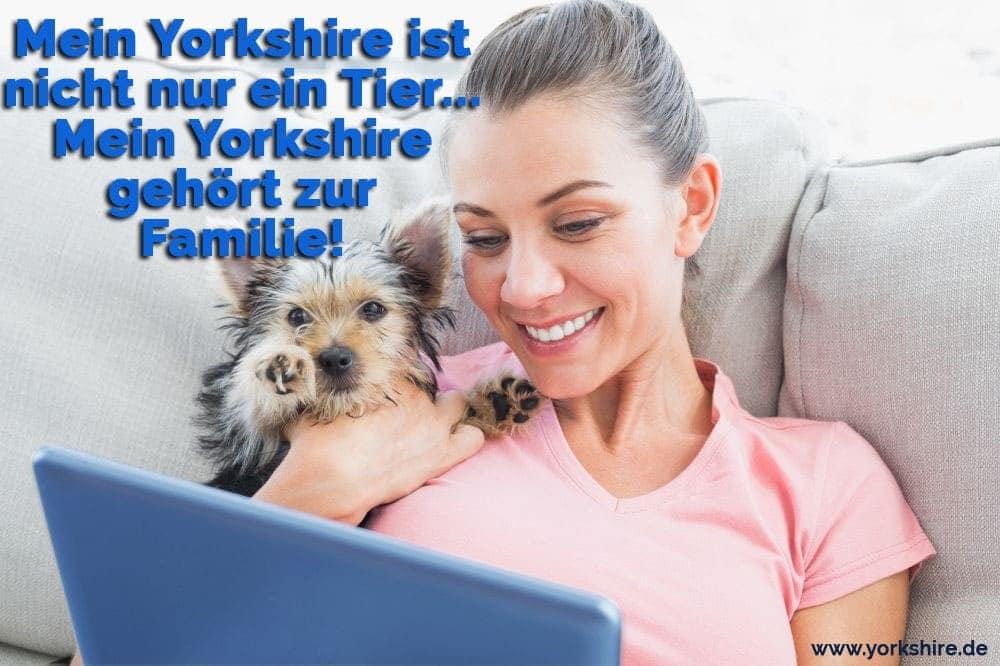 Ein Frau in der computer mit ihr Yorkshire