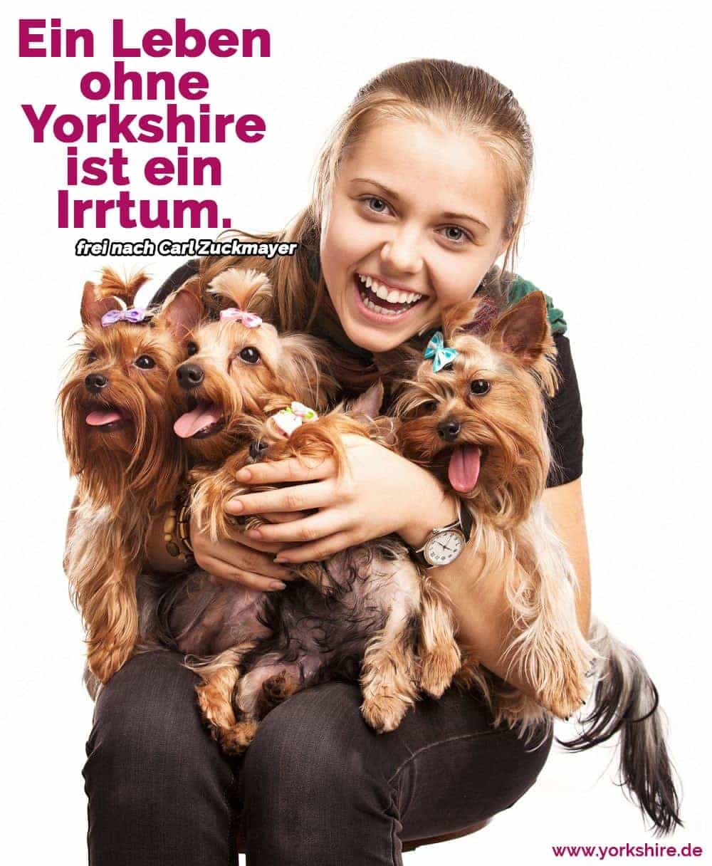 Ein Frau mit drei Yorkshire