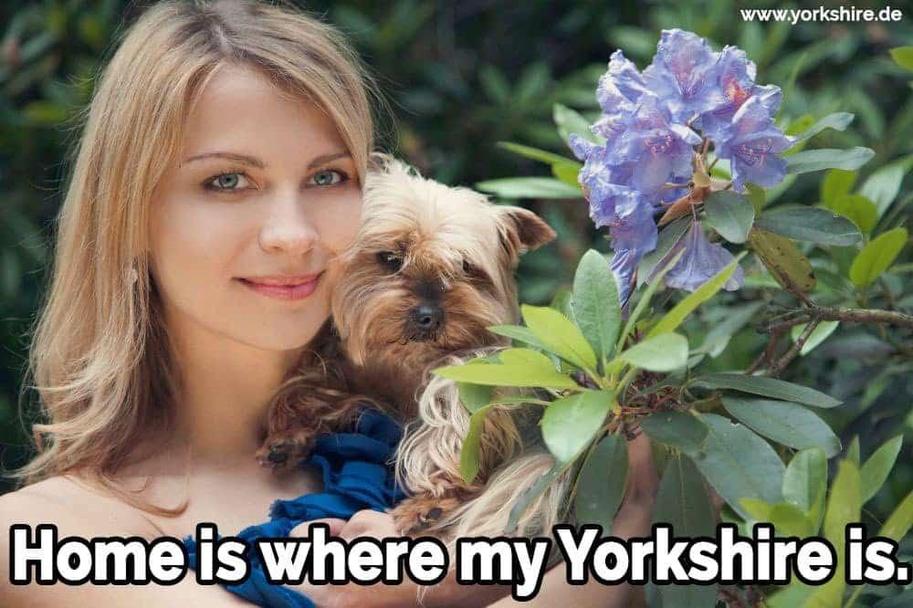 Die Frau hält einen Yorkshire im Gartem