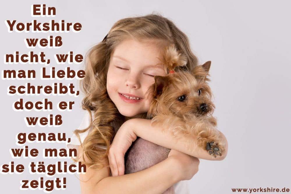 Das Mädchen hält ihr Yorkshire