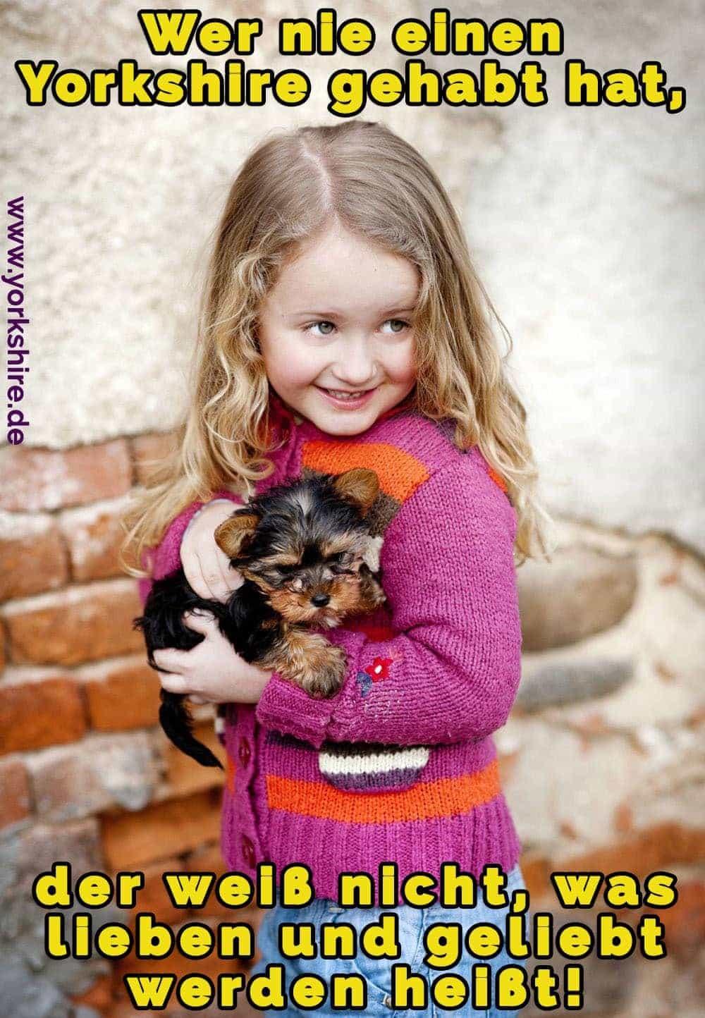Das Mädchen hält ihr Yorkshire Terrier