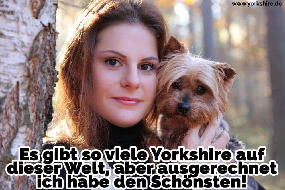 Ein Frau hält ihr Yorkshire