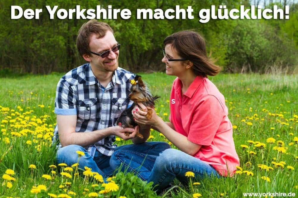 Ein Paar spielen mit ihren Yorkshire im Garten