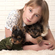 Beautiful young happy girl with puppies of Yorkshire terrier